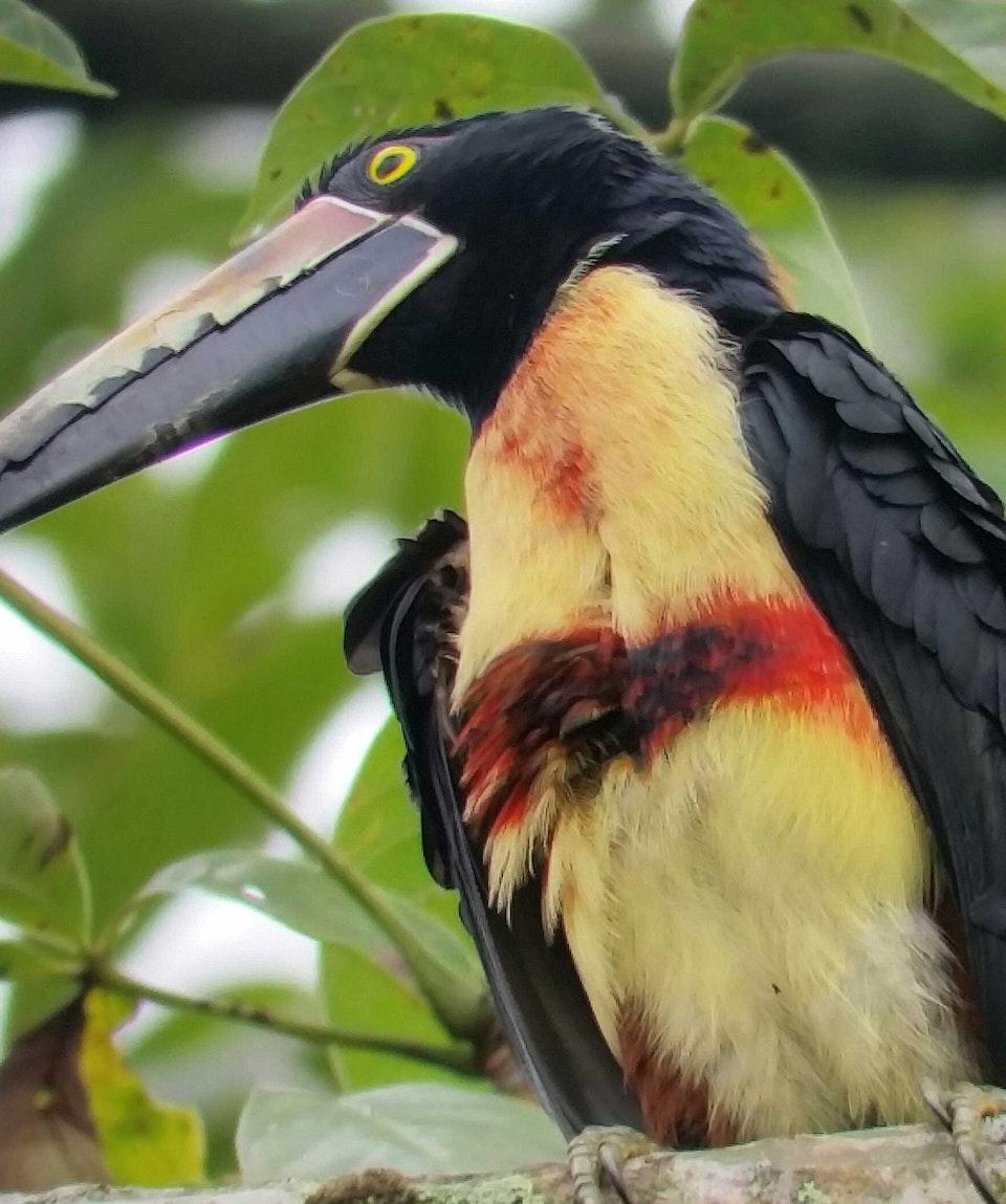 Rainforest Explorers Bird