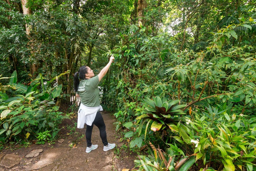 Looking for wildlife at Monteverde Costa Rica