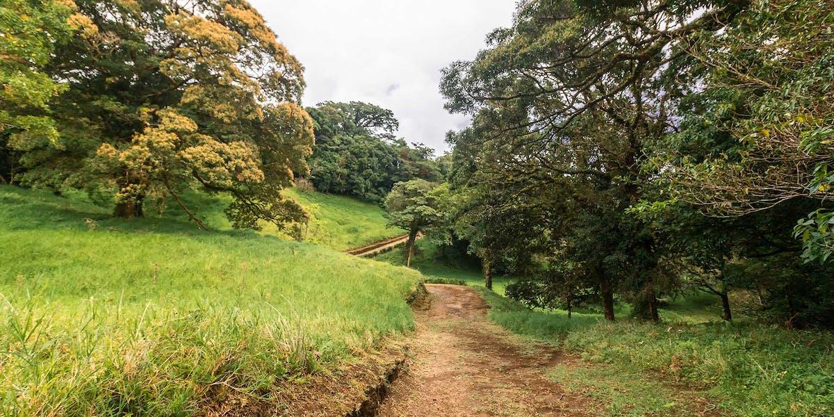 Curicancha Reserve Monteverde