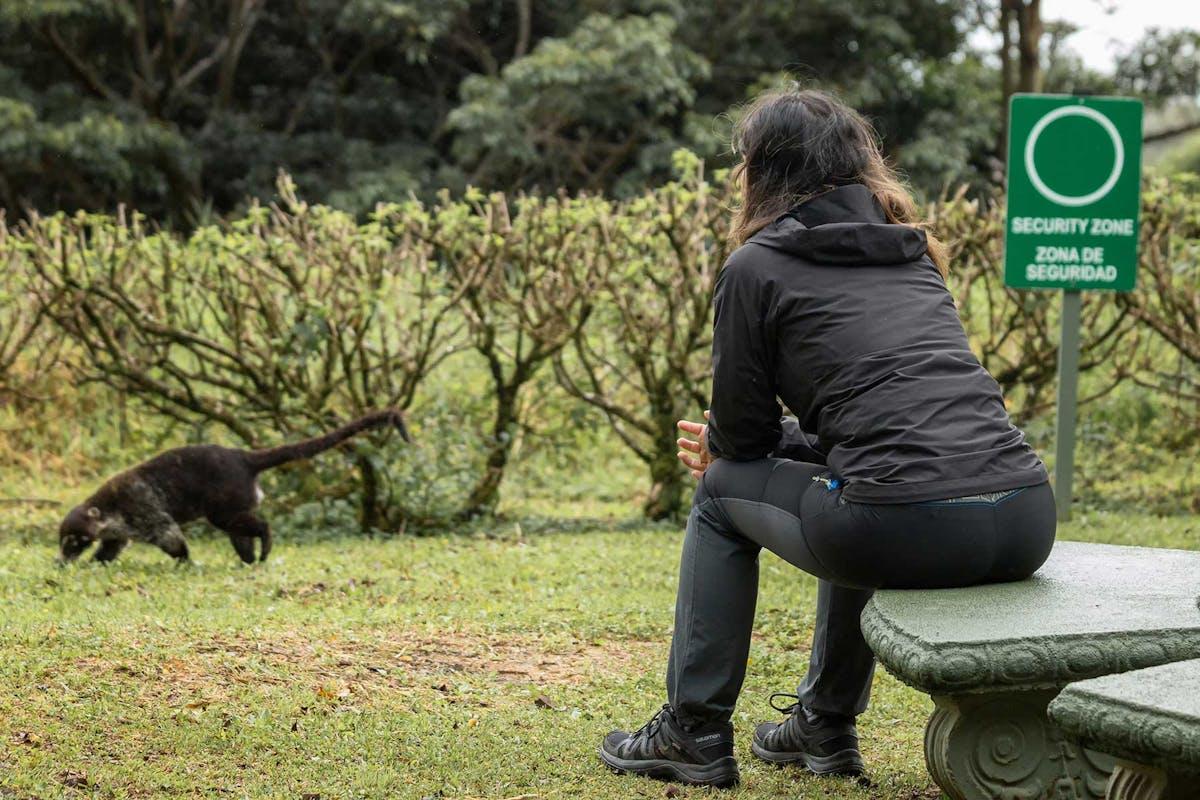 Curi Cancha Reserve Monteverde