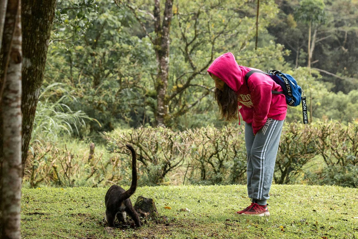 Monteverde Family Tours at Curicancha Reserve