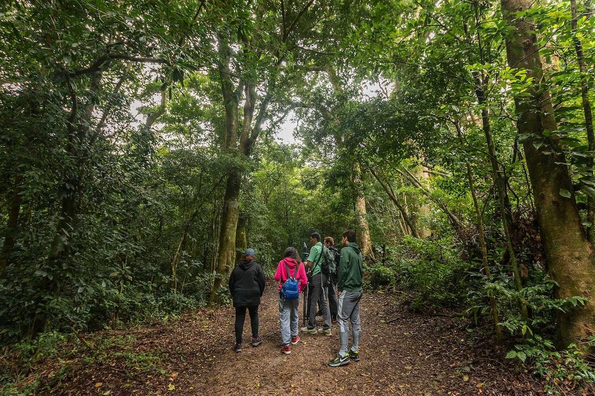 Monteverde Curicancha Reserve