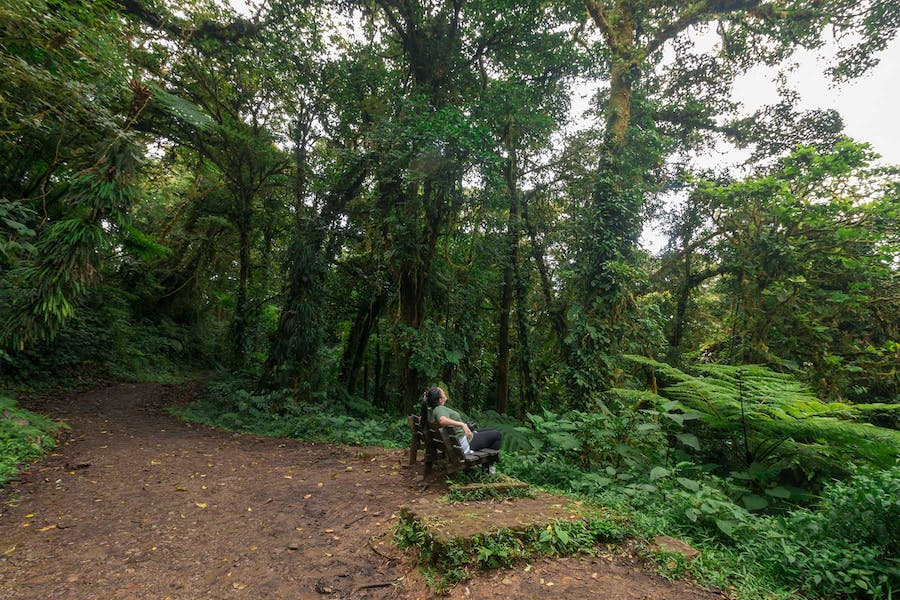 Monteverde Cloud Forest Reserve is a nature paradise
