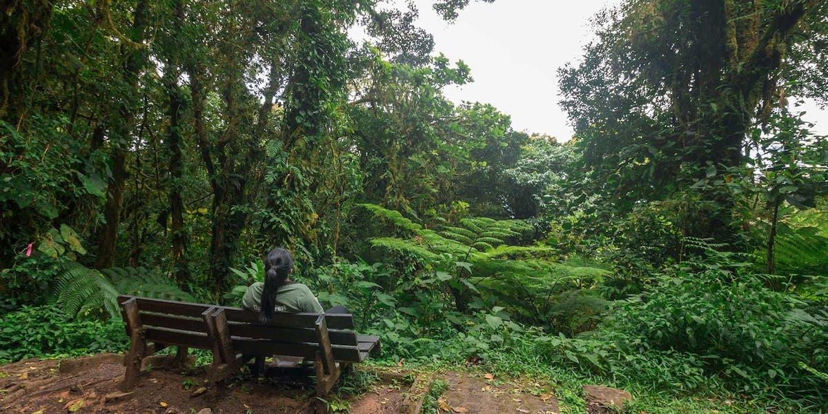 Monteverde Cloud Forest Reserve Nature Tours
