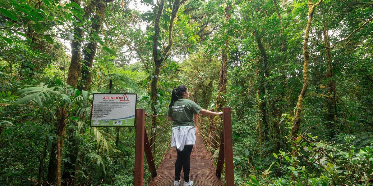 Monteverde Cloud Forest Reserve Hanging Bridge