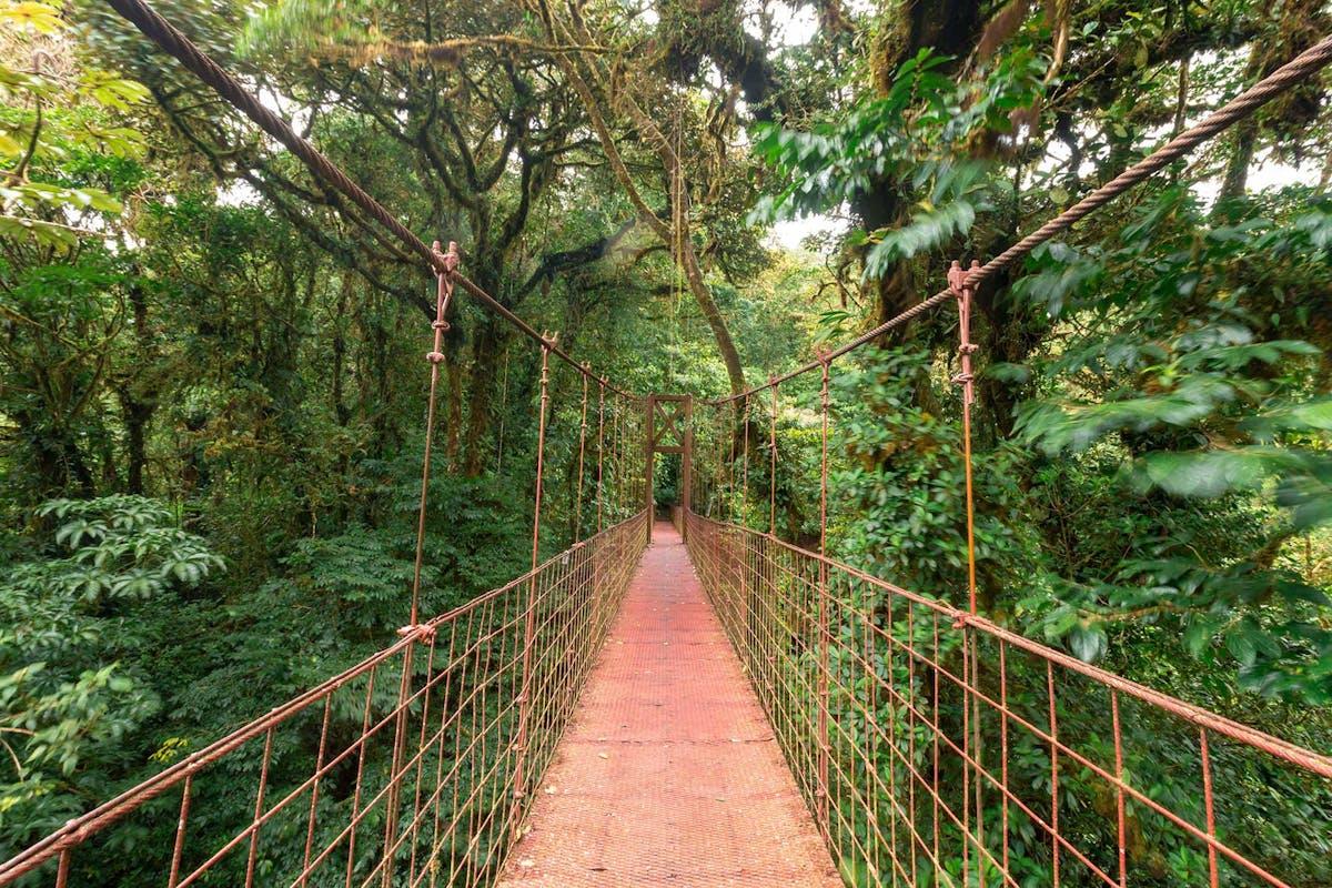 Monteverde Bridges
