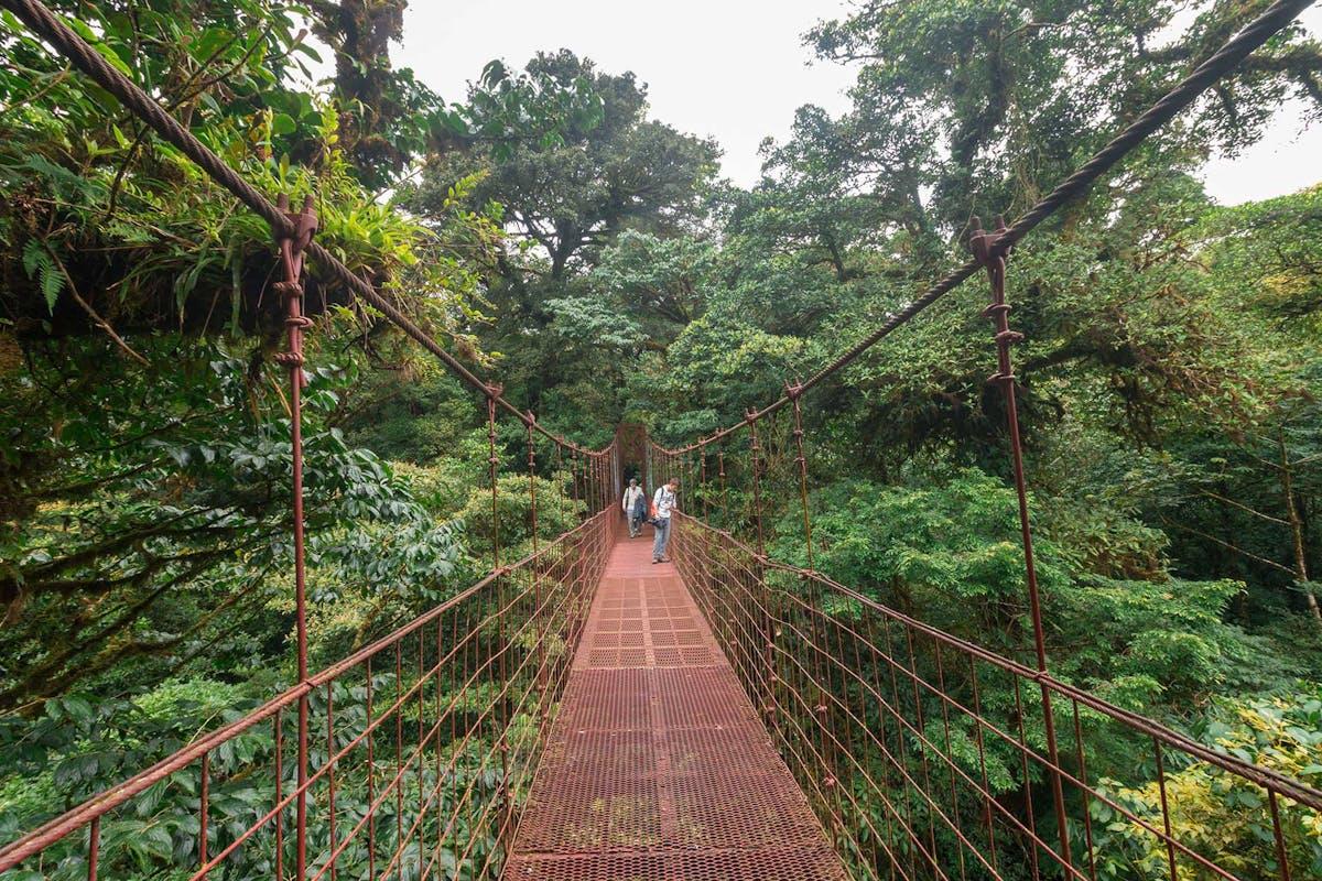 Hanging Bridges in Monteverde Cloud Forest