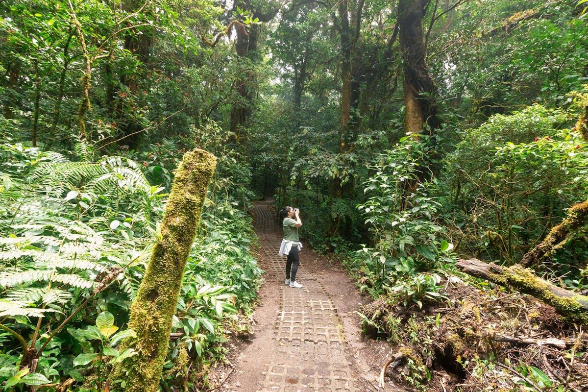 Walking at Monteverde Cloud Forest