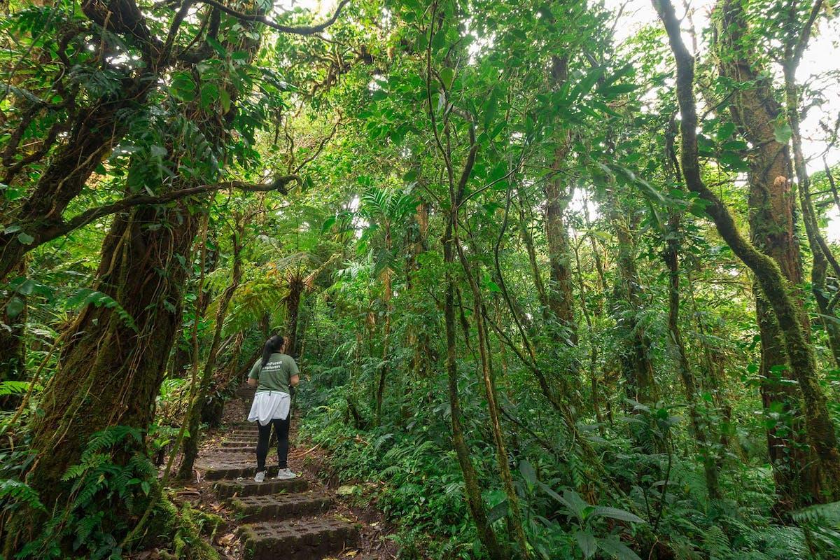 Hiking at Monteverde