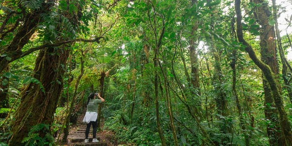 Monteverde Cloud Forest Reserve Guided Walk