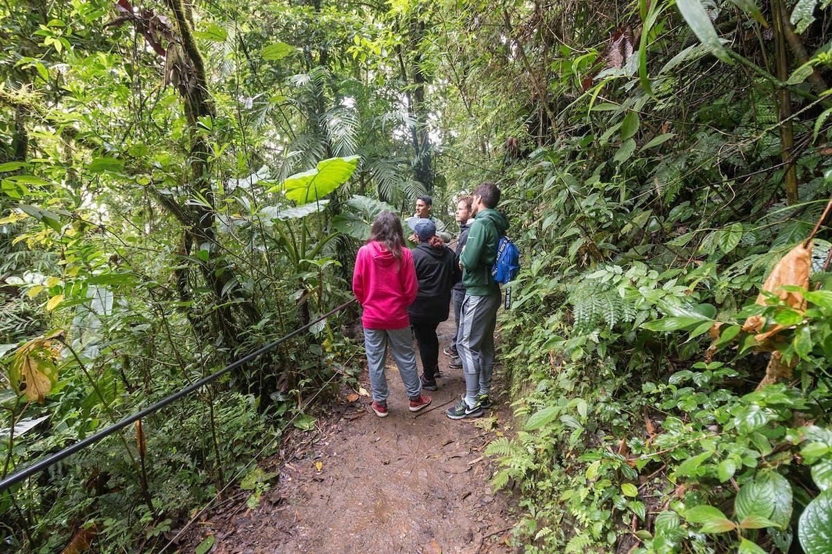 Monteverde Cloud Forest Guided Walk
