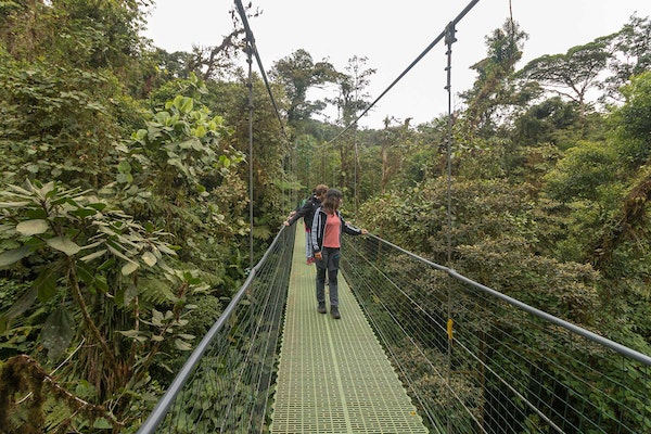 Monteverde Cloud Forest and Sky Walk Bridges