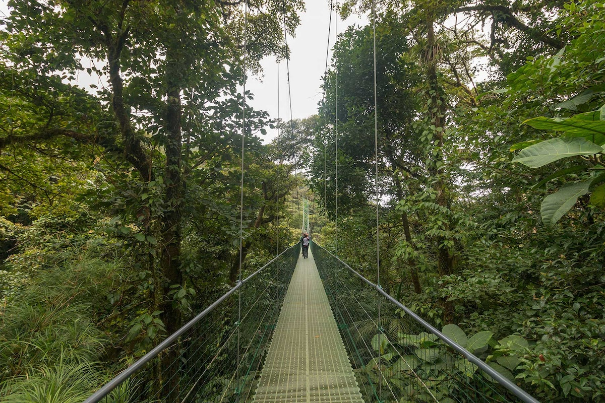 Sky Walk Bridges in Monteverde