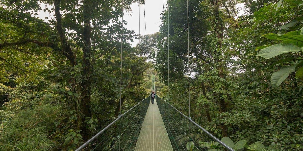 Sky Walk Bridges in Monteverde