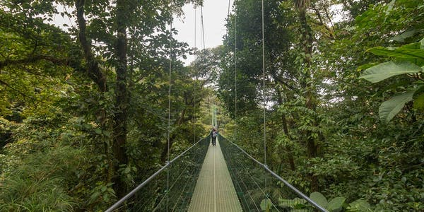 Sky Walk Hanging Bridges Monteverde