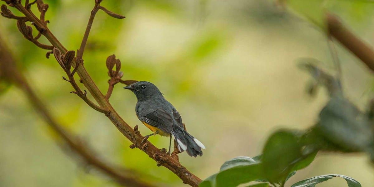 Monteverde Birdwatching Tours