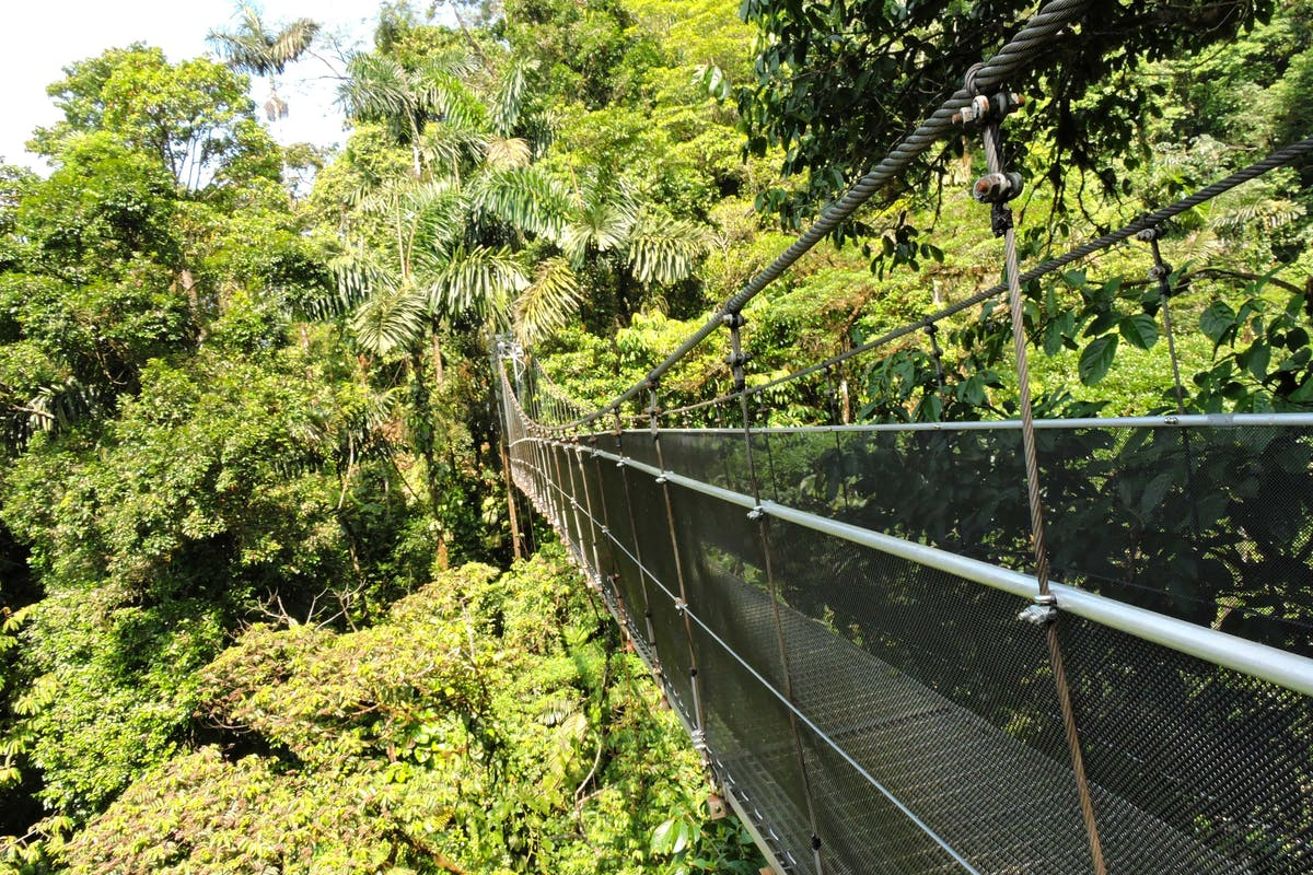 Arenal Hanging Bridges Hike 1