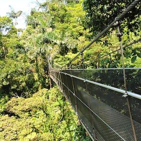 Arenal Hanging Bridges Hike 1