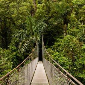 Arenal Hanging Bridges Hike Photo 1