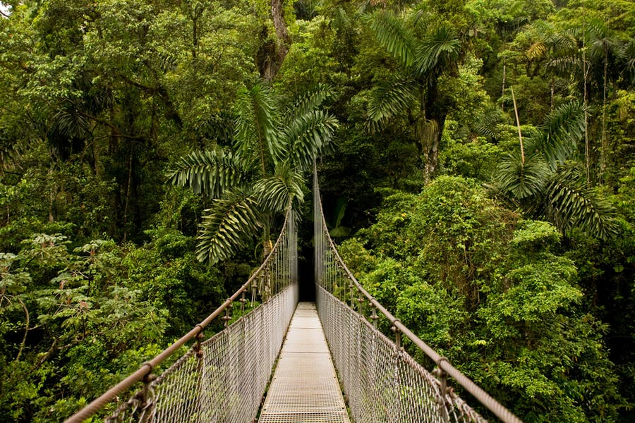 Arenal Hanging Bridges View Costa Rica