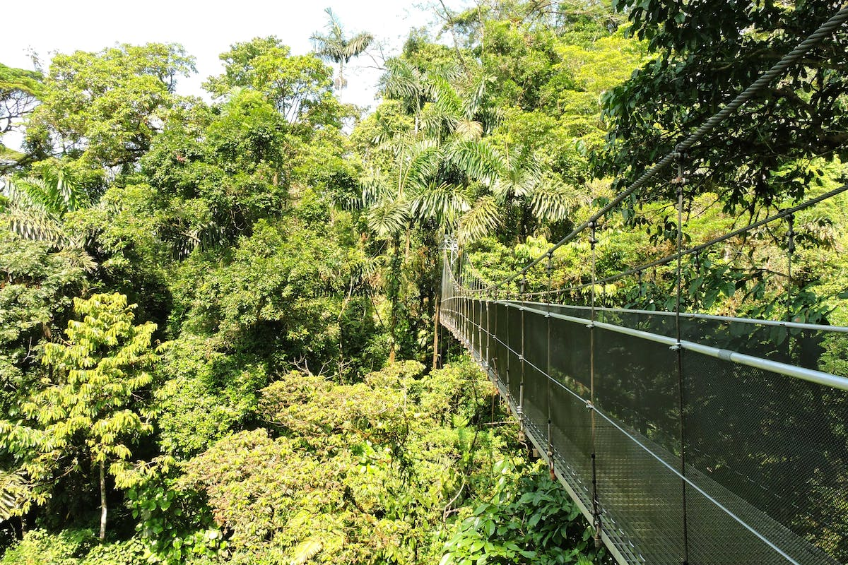 Arenal Hanging Bridges Hike Photo 5
