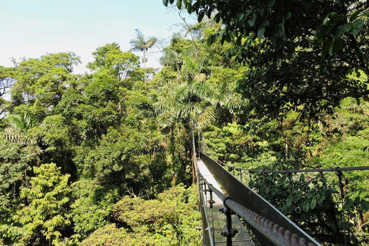 Mistico Hanging Bridges Arenal Costa Rica 4