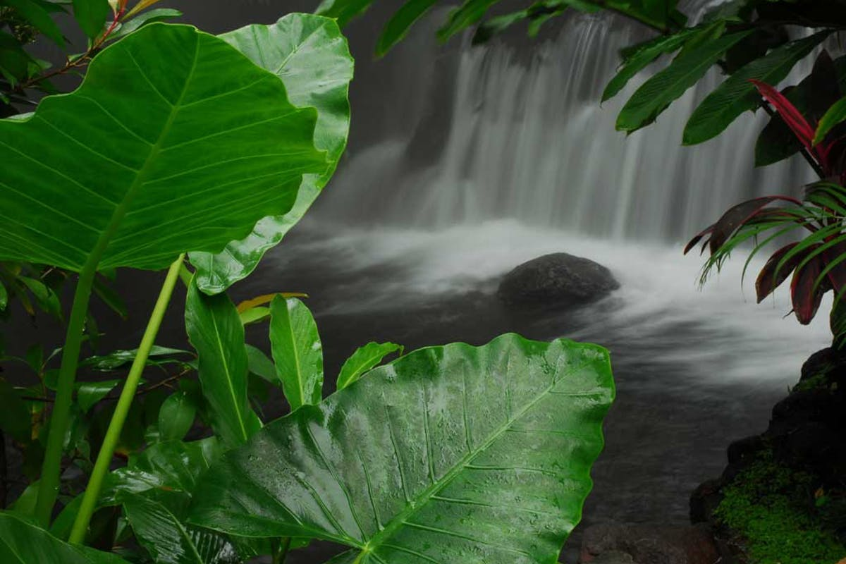 Tabacon Hot Springs Photo 11