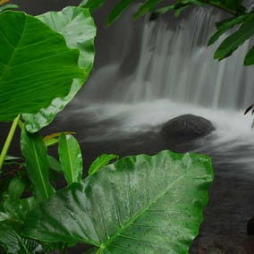 Tabacon Hot Springs Photo 11